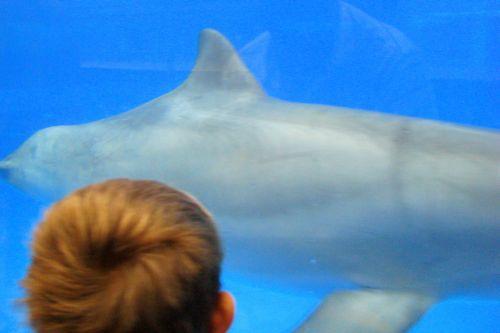 dolphin-tank