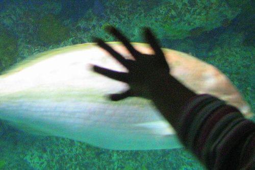 hand-on-glass