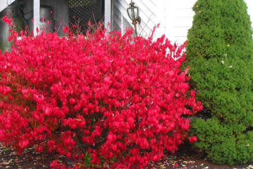 red-green-bushes