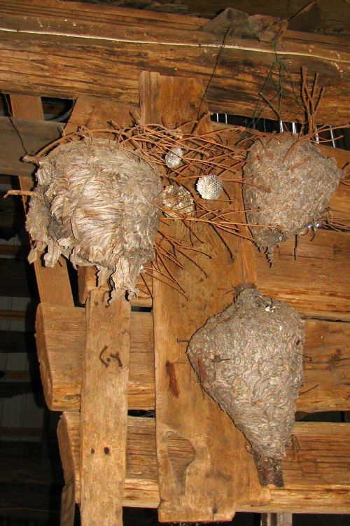 bees-nests