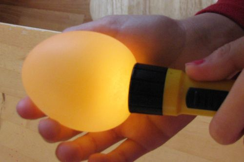 egg-illuminated1