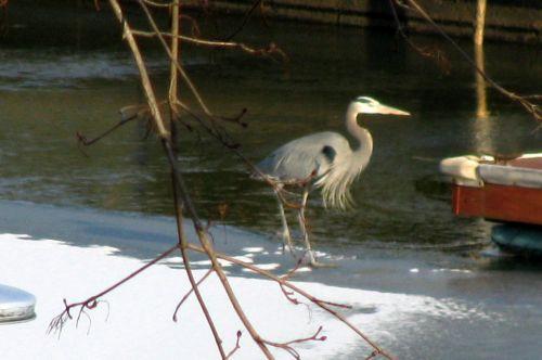 heron-ice