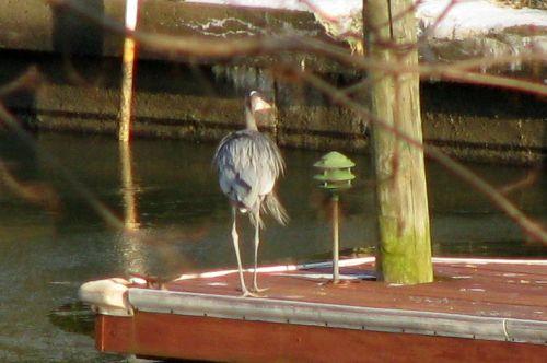 heron-pier