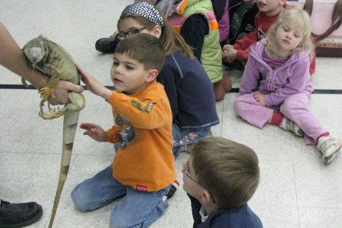 petting-iguana