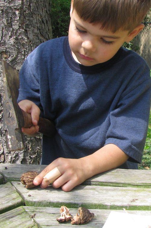 brian-walnuts