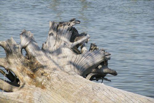 dead-log