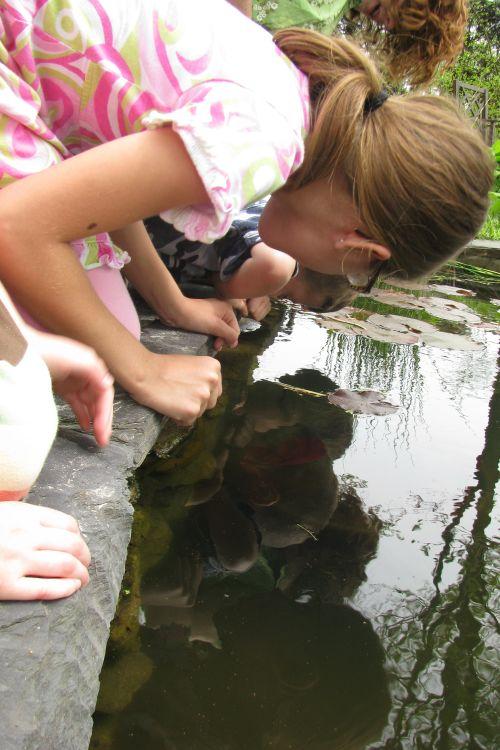 watching-tadpoles