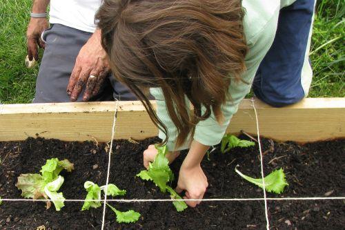 brooke-planting
