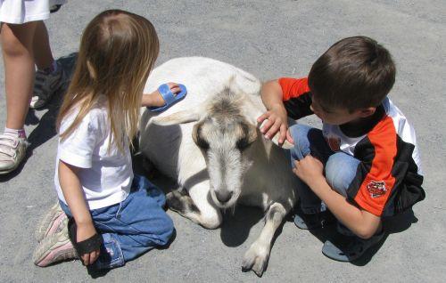 brea brian brushing goat