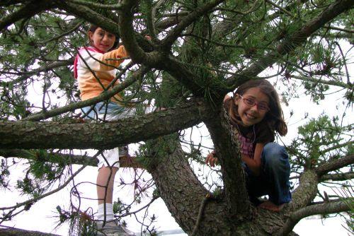 brooke in tree