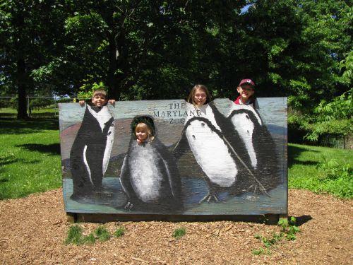 penguin set up