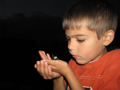 brian grasshopper