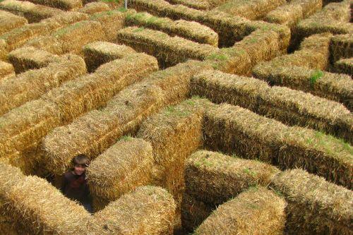brian maze